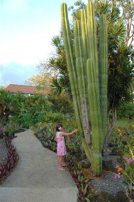 Kiahuna Plantation Resort Kauai Photos Of Moir Garden